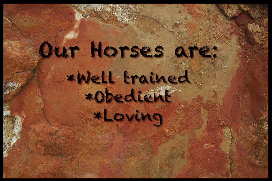 Our horses are: well trained, obedient & loving