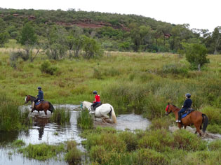 Horses Safari - Crossing Water